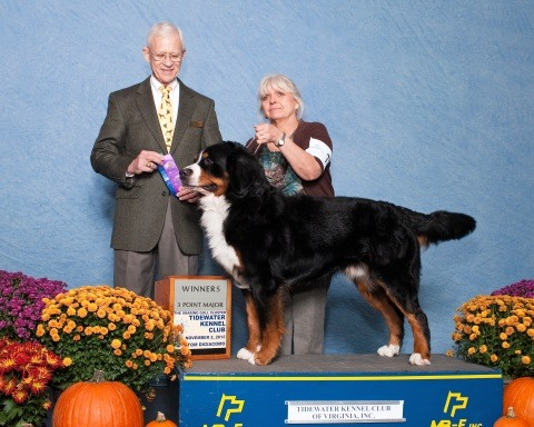 Tidewater Kennel Club and Virginia Beach Kennel Club All-Breed Dog Show 2012