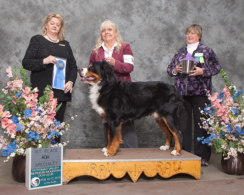 Potomac Valley Bernese Mountain Dog Specialty Show 2013 - First Place Conformation, Amateur Owner Handler Class