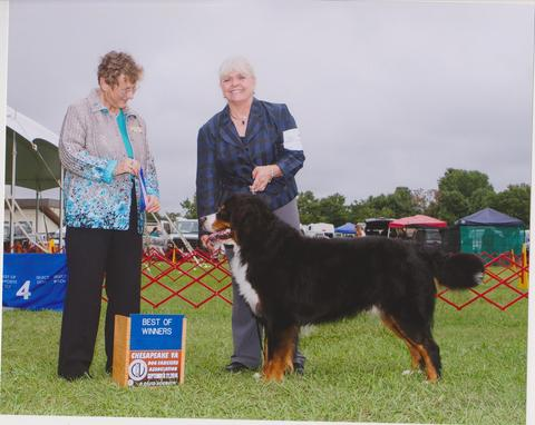 2014 Chesapeake Dog Fanciers Association Dog Show