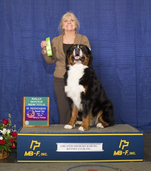 2014 Greater Fredericksburg Kennel Club All-Breed Dog Show