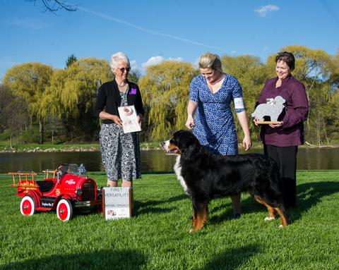 2016 Bernese Mountain Dog Club of America Dog Show:  First Place Specialty Award