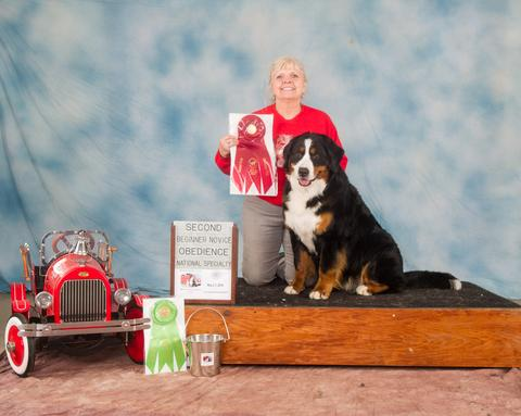 2016 Bernese Mountain Dog Club of America Dog Show:  Second Place Beginner Novice Award