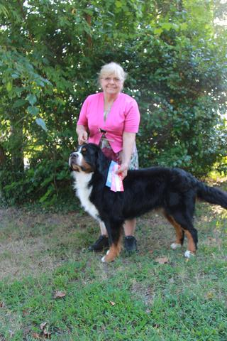 2015 Chesapeake Dog Fanciers Dog Show: First Place: Open Dog