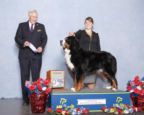 2015 Langley Kennel Club Dog Show:  Winners Dog