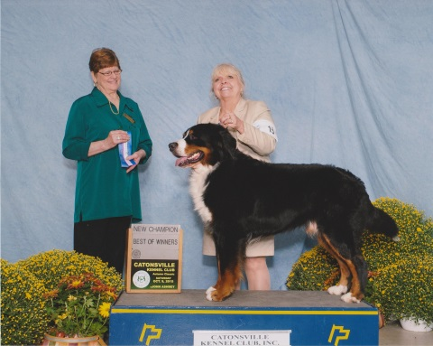 2015 Catonsville Kennel Club Dog Show: First Place: New Chamption, Best of Winners