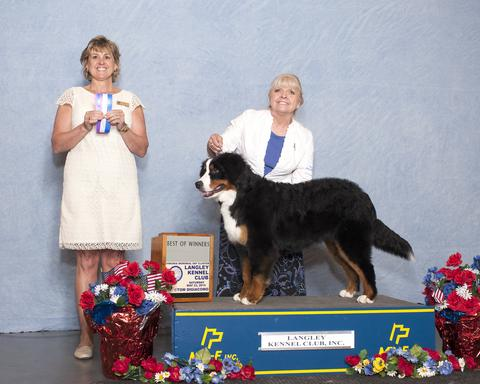 2015 Langley Kennel Club Dog Show:  Best of Winners Title