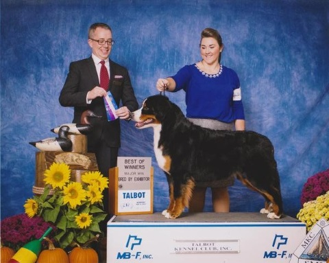 2015 Talbot Kennel Club Dog Show:  Best of Winners: Bred By Exhibitor Class