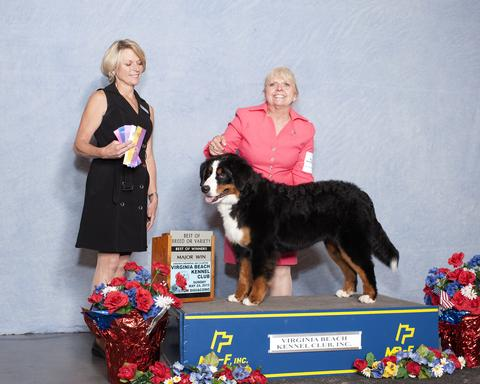 2015 Virginia Beach Kennel Club Dog Show:  Best of Breed Title