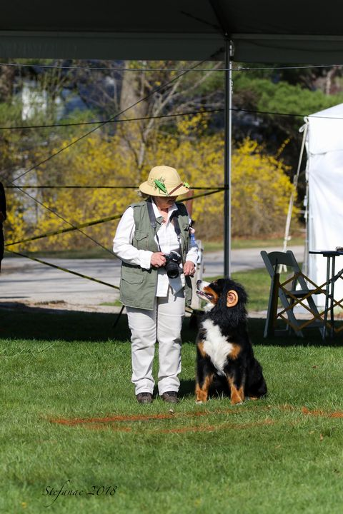 2018 Bernese Mountain Dog Club of America Specialty Fourth Place Team Obedience for Destiny