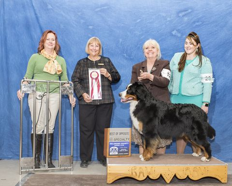 2018 Delaware County Kennel Club Dog Show Best of Opposite Award for Destiny