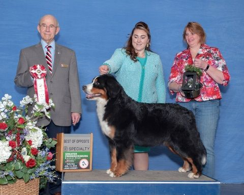 2018 Charlottesville-Albemarle Kennel Club Dog Show Best of Opposite Award for Destiny