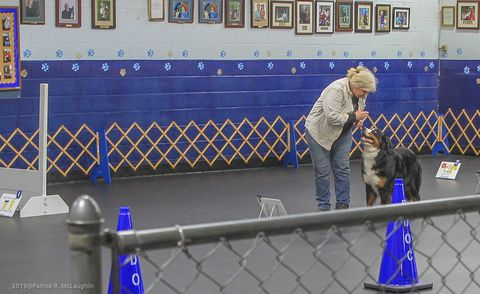 2019 Richmond Dog Obedience Club 2nd Rally Advanced for Destiny