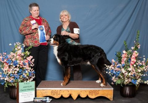 Potomac Valley Bernese Mountain Dog Specialty Show 2012