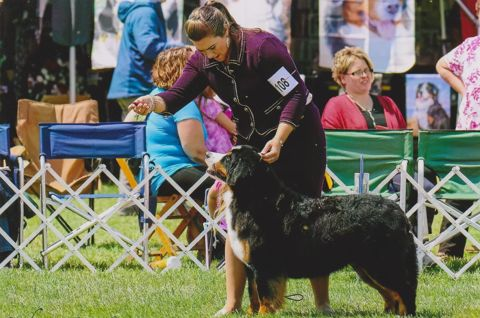 2016 Bernese Mountain Dog Club of America Dog Show:  Title Holder Awards