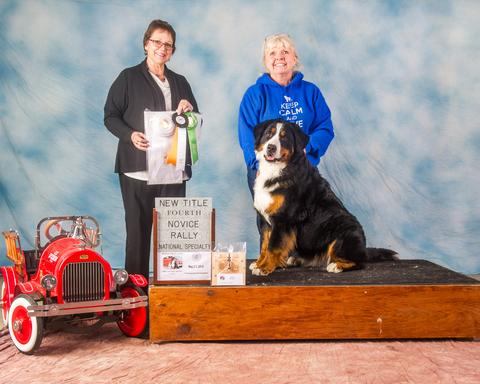 2016 Bernese Mountain Dog Club of America Dog Show: Novice Rally Award
