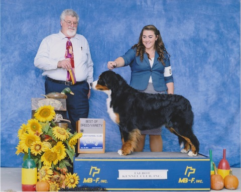 2016 Talbot Kennel Club Dog Show:  Best of Breed